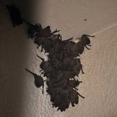 Bat Removal Blog